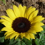 Flowers_2012_002