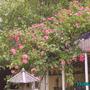 Our_garden_003