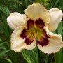 Daylily cross - Sulphrite Prism X Piano Man