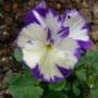 Flowers_2012_008