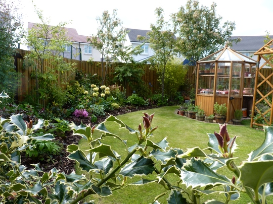 My shady (full shade in winter, quite sunny in summer) border and greenhouse