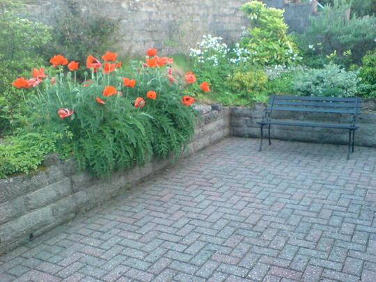 Poppies again !!