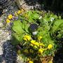 Spring pot 31 May