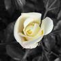 Flowers_2012_015_copy_2
