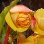 Flowers_2012_020