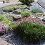 My front Rockery