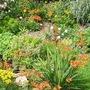 My garden last summer