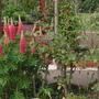 Garden_083