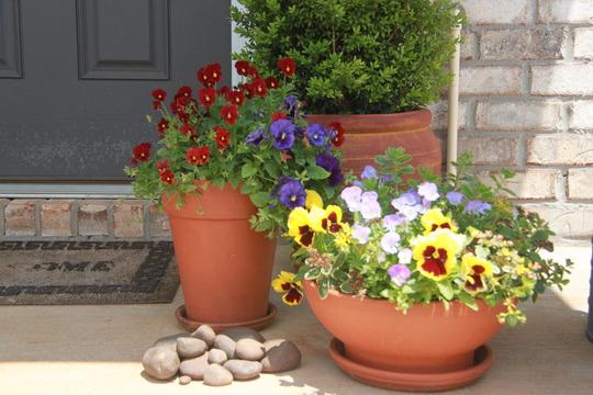 Flower pots 2012