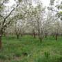 Blossoms...