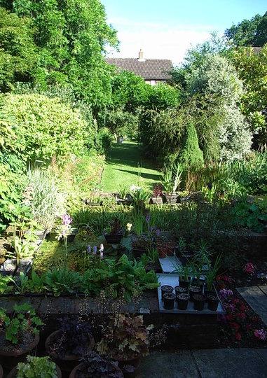 Back garden - June 2008