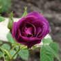 Flowers_2012_014
