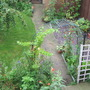 right side view of my back garden