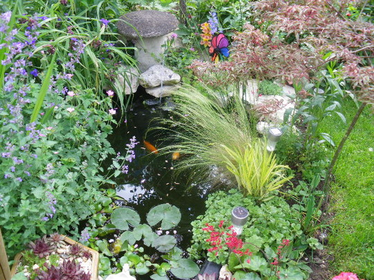 Our Pond this Morning
