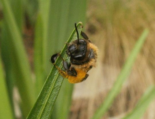 Bee nice...