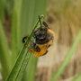 Bee_nice