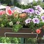 Summer_planting