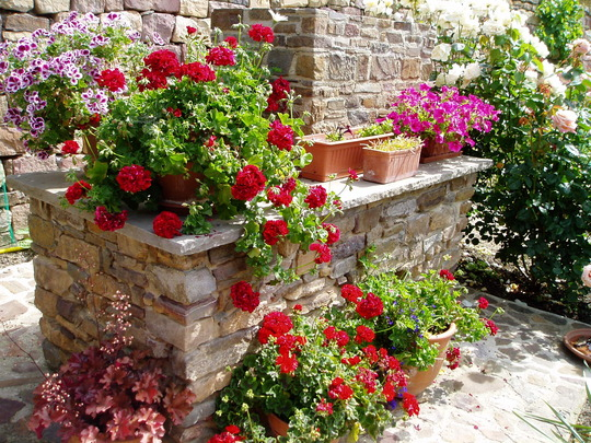 Pelargoniums, Petunias, Mesembryanthemum and Heuchera 'Mahogany'