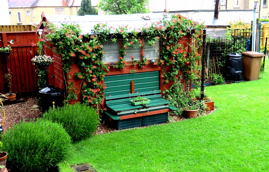 Honeysuckle shed