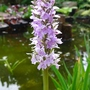 Orchid_2012