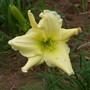 Pale_yellow