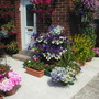 front of house in bloom