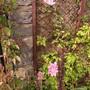 10_june_2012_003