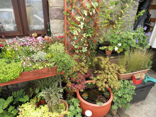 The Japansese section with new trellis n rocky trolly