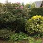 Garden_20