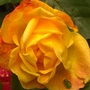 masgerade...diff shades of yellow orange