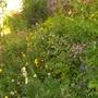 banking ... kitchen garden