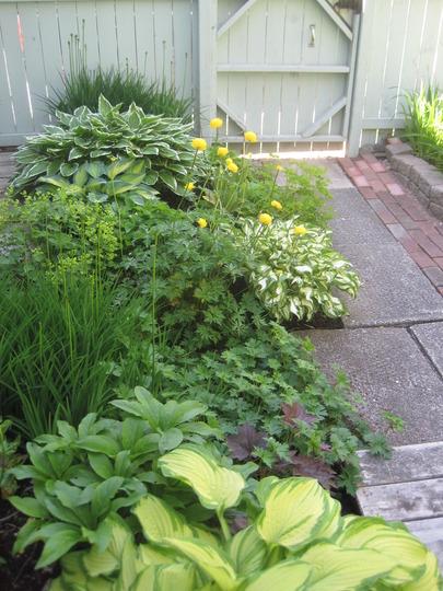 shade garden by back gate