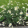 Garden_3049