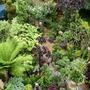My_garden_2012_068