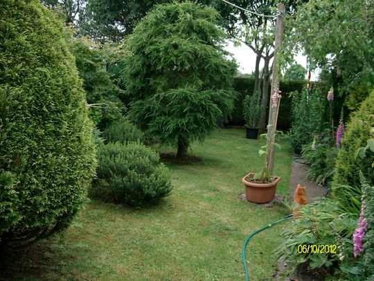 lawn and conifers and large pine
