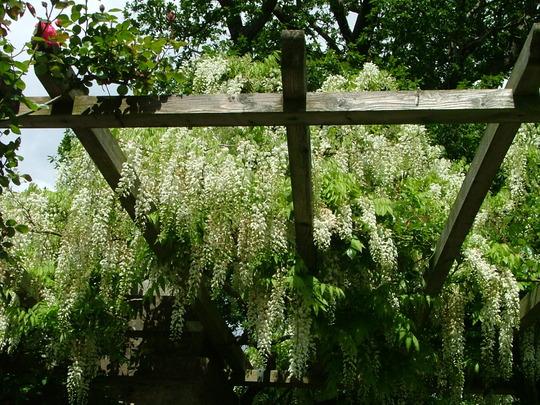 Holker Hall Gardens