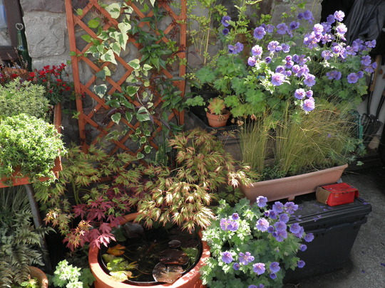 Mornin sun catches the japanese garden : )