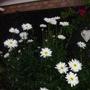 Garden_4th_july_2011_021