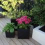 Garden_4th_july_2011_011