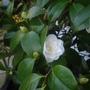 Garden_march_2012_17_