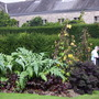 Veg garden