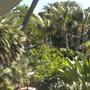 Entrance of the San Diego Zoo (Howea forsteriana (Kentia palm))