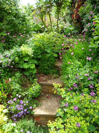 The Steps to the Side garden 2
