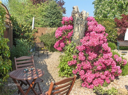 Same RHODODENDRON