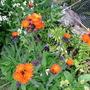 Wildflowers near Pond