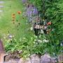 More wildflowers near Pond