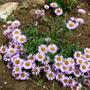 Flowers_2012_029