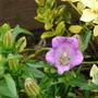Flowers_2012_036