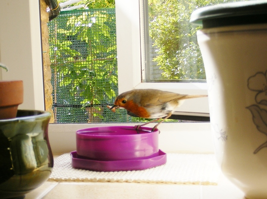 Robbie, daily visitor 2011.