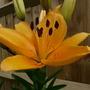 Flowers_2012_021